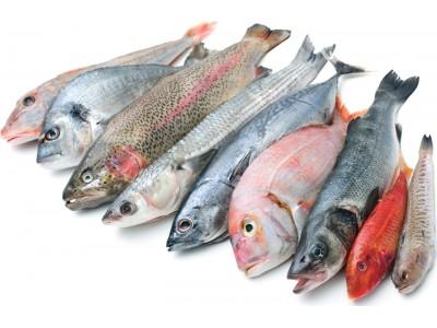 Энциклопедия рыбы и морепродуктов